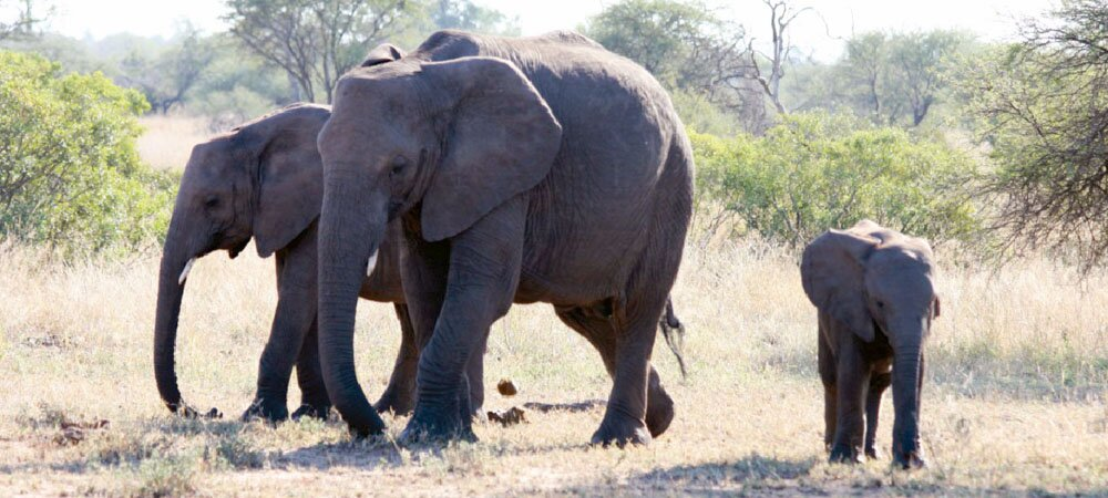 wacky wildlife wonders wild animals from africa facts and
